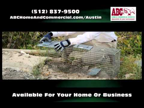 Pest Control Austin TX - ABC Home And Commercial Services