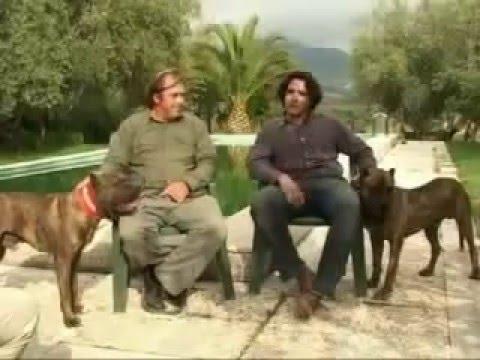 сармат фото собака