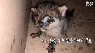 허피스로 눈이 붙은 젖먹이를 구조했어요 rescued Kitten