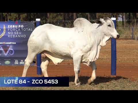 LOTE 84 - ZCO 5453 - NELORE