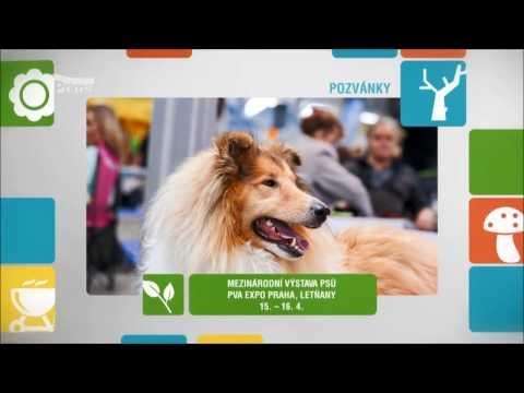Pozvánka na mezinárodní výstavu psů Prague Expo Dog