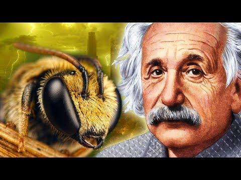 Что если пчелы исчезнут? Предсказания Ванги и Эйнштейна