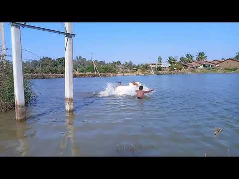 Itagi khanapur sharata strong bull,,