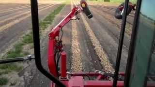 zbieranie cebuli kombajnem GRIMME TECTRON 415