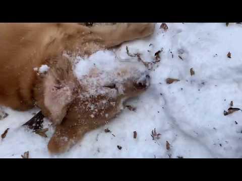 僕も君は雪が大好き!