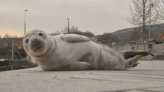 Cute baby seal found in Sweden harbour