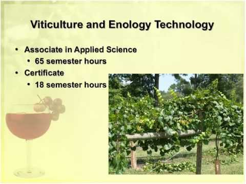 Viticulture and Enology North Carolina's Grape Growing and Winemaking Industry / BioForum