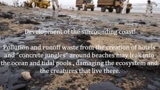 The Intertidal Zone THE MOVIE