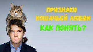 Признаки кошачьей любви: как понять что питомец  вас любит - Смешные кошки МатроскинТВ