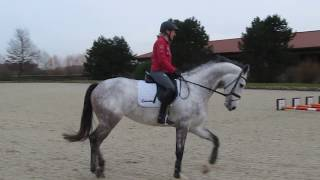 Ingrid Klimke auf Conquista, offenes Training 25.01.18 Video ?