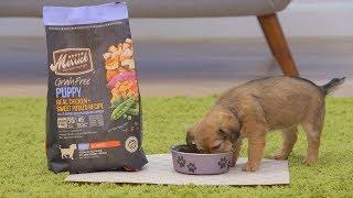 Merrick Grain-Free Dog Food | 2018