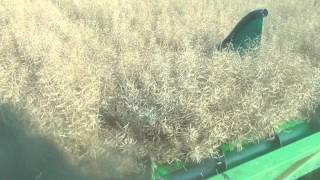 SC Winter Canola Harvest 2012 -Row Crop Header on 30 inch rows.wmv