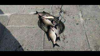 Рыбалка в центре города. Набережная-фидер 2021.06.13
