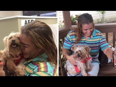 Dog Reunited With Family After Three Years