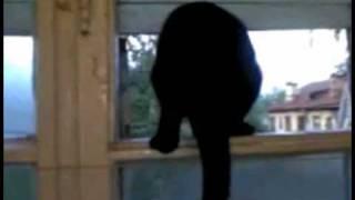 Kot, który szczeka