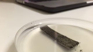 zinc in silver nitrate and agar solution