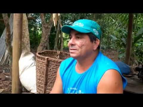 Pactos Extrativistas do Rio Negro