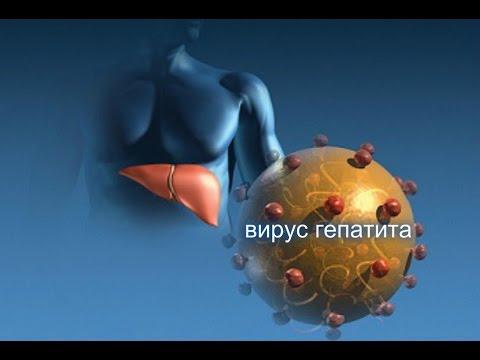 Гепатит А  Вирусный гепатит С симптомы лечение  Хронический гепатит Б симптомы