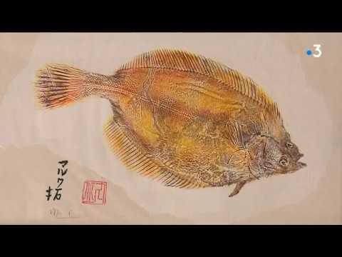 L'art Animal :  à Quiberon On Pratique Le Gyotaku