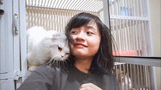 Kucing termahal di Dunia?!!!!!