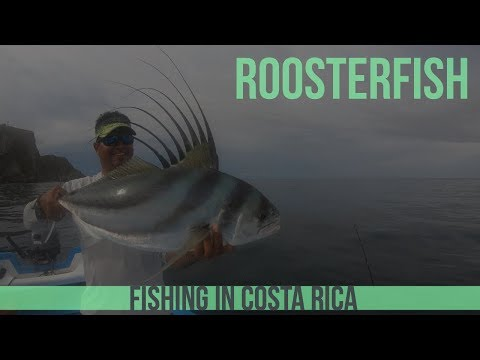 Pura Vida 3 Roosterfish In 1 Day Fishing In Costa Rica - Part 5