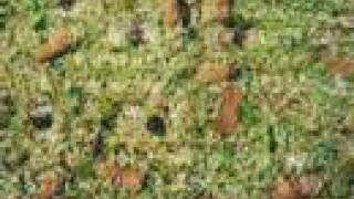 Lawn Aeration, core aeration, Austin Texas surrounding areas