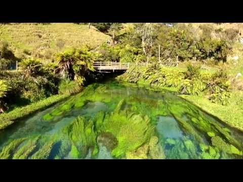 Te Waihou Walkway and Blue Spring Putaruru New Zealand  ** only 30 minutes from Rotorua **