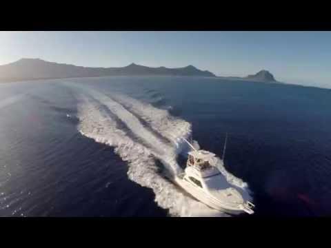 Whale Watching - JPH Charters, Mauritius, 2014