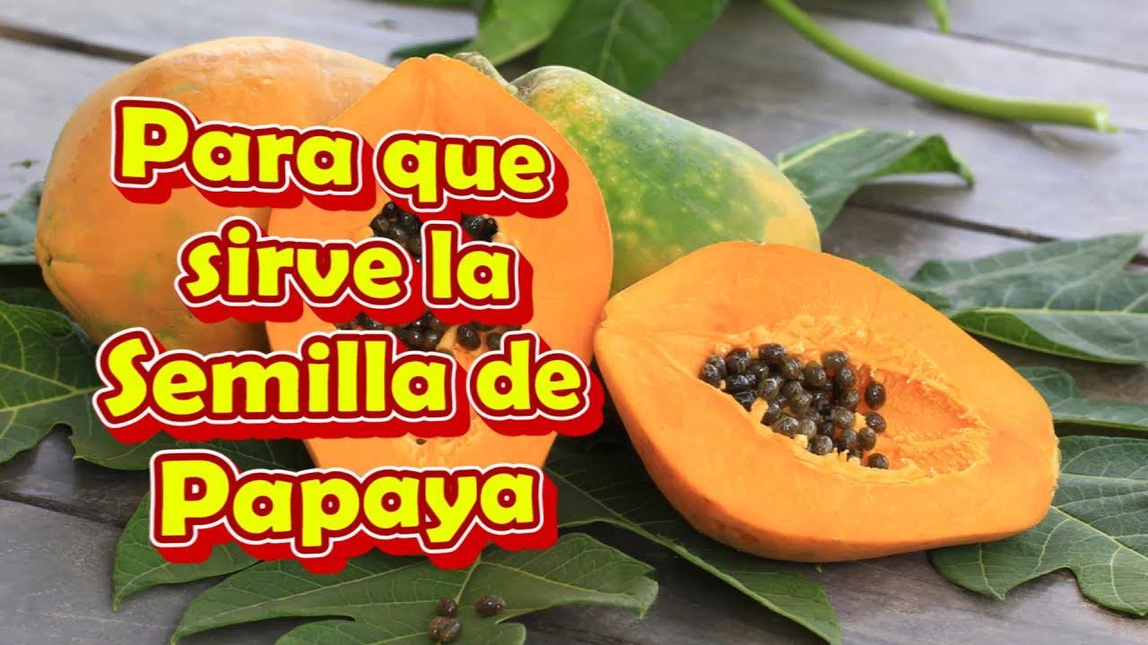 Sirven para semillas licuadas papaya las de que