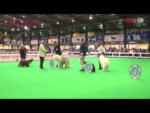 Midland Counties Dog Show 2015 - Pastoral Shortlist