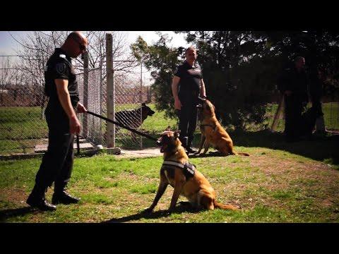 Police K9 Dogs Unit Open Day 2017 Bulgaria - СПС Пловдив - Police Dogs Demonstration Training