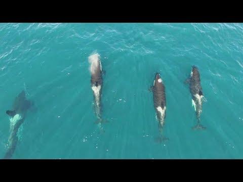 Vesterålen fishing adventure - Epic drone and underwater footage!