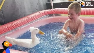 Boy And His Duck Best Friends Have So Much Fun Together | The Dodo