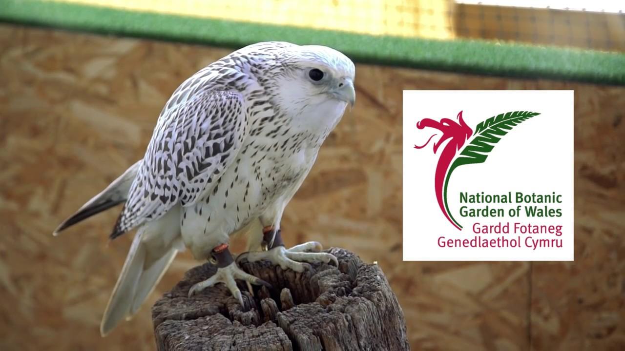 British Bird Of Prey Centre Youtube