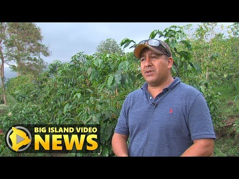 Kona Coffee Farmer Andres Magana Ortiz Faces Deportation (Jun. 6, 2017)