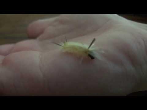Very Tiny Caterpillar