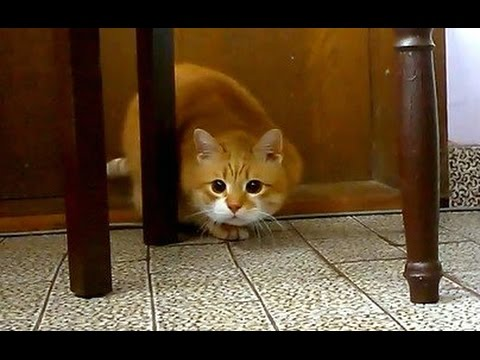Cat's Hunter Instinct