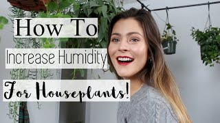 Best Tips to Increase Humidity in your Home! How to Raise Humidity for Houseplants!