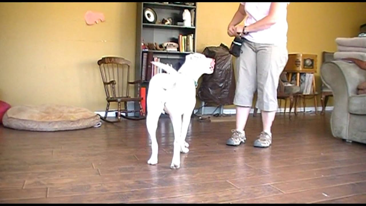 Deaf Dog Training Positive Interrupter To Get Attention Youtube