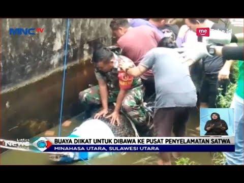Buaya Pemangsa Manusia Dievakuasi dan Diselidiki ke Pusat Penyelamatan Satwa - LIS 15/01