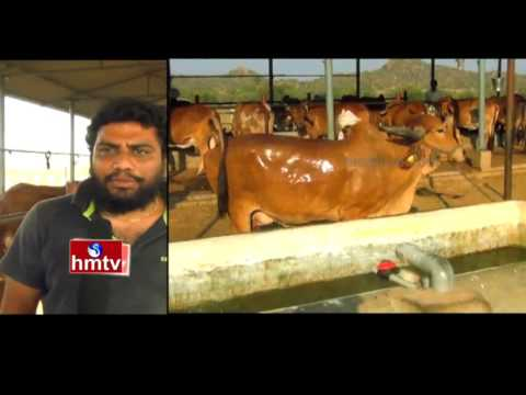 B Tech Students Dairy Farm | Growing Fruits and Vegetables in Sand Sandy Soil | Nela Talli | HMTV