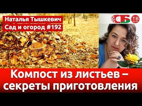 Компост из листьев – секреты приготовления