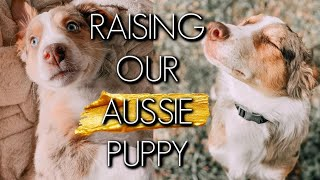 WHAT ARE AUSTRALIAN SHEPHERD PUPPIES REALLY LIKE? || RAISING OUR AUSSIE PUPPY Q&A