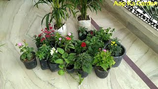 New plants shopping / Sunday garden shopping / winter plants shopping