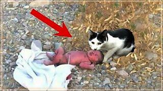 وجدت القطة طفلاً وحيدا في الغابة .. لكن ما قامت به كان غير متوقع !!