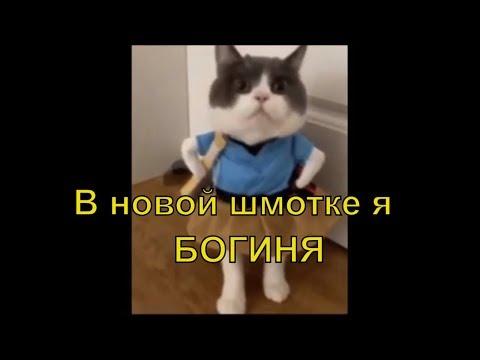 Как сшить для кошки костюм