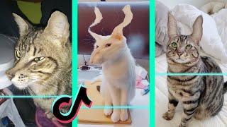 Time Warp Scan tiktok cat compilation (filter tiktok) part 3