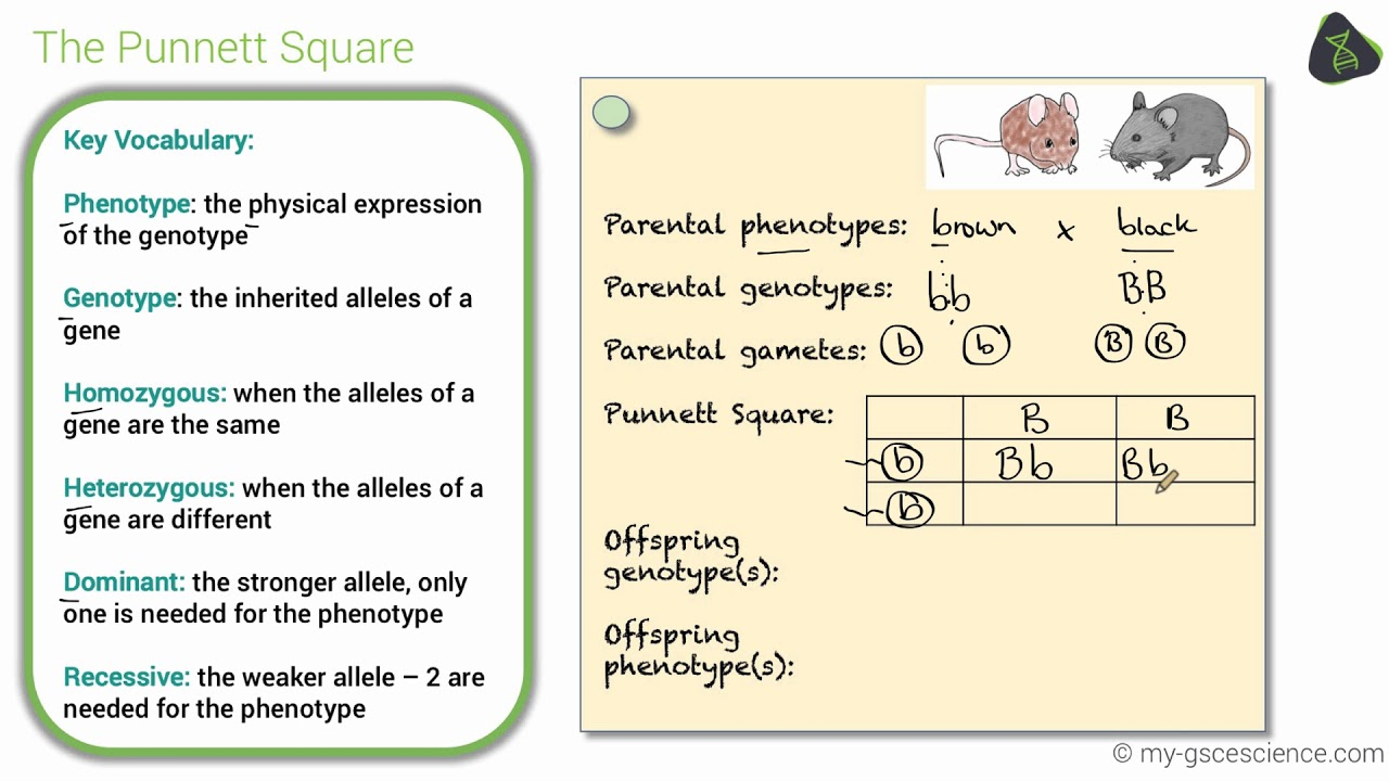 Gcse Biology Genetic Diagrams  Edexcel 9-1