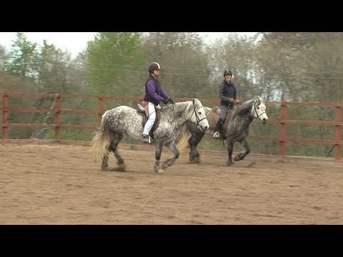 Rehomed World Horse Welfare Highland Ponies Help Rda