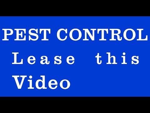 Pest Control Removal Fast | (206) 456-1642 | Pest Control Manhattan Beach, CA